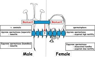 Female masturbation with vibrator