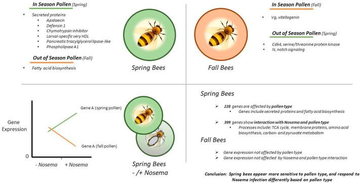 Connecting the nutrient composition of seasonal pollens with