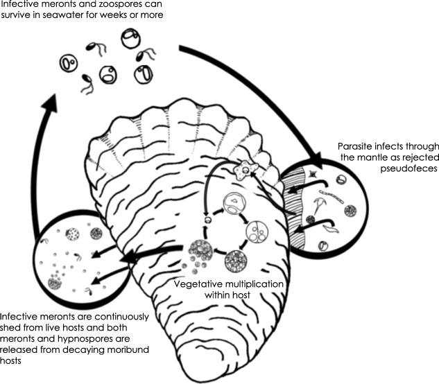 Parasite Transmission Through Suspension Feeding