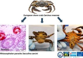 paraziták zapolása papilloma vírus egész éves tünetek