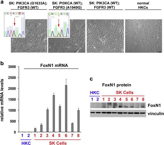 Sustained Akt Activity Is Required to Maintain Cell