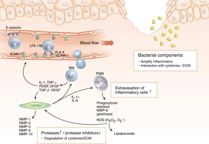 Inflammation in Wound Repair: Molecular and Cellular