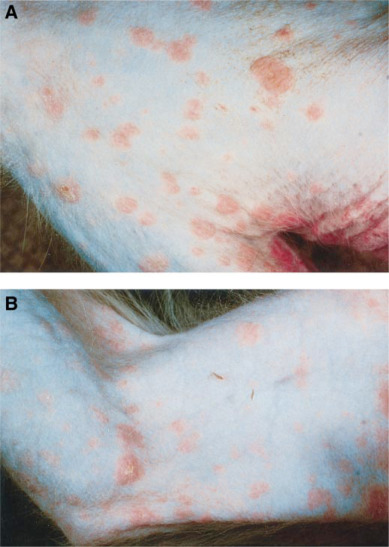 Characterization of the Cutaneous Exanthem in Macaques Infected with