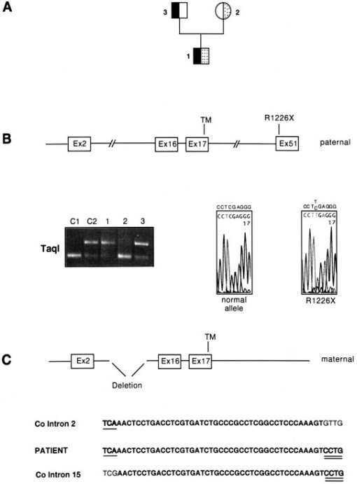 1 s2.0 S0022202X15415477 gr6 deletion of the cytoplasmatic domain of bp180 collagen xvii causes  at mifinder.co