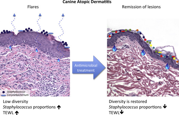 Canine and Human Atopic Dermatitis: Two Faces of the Same