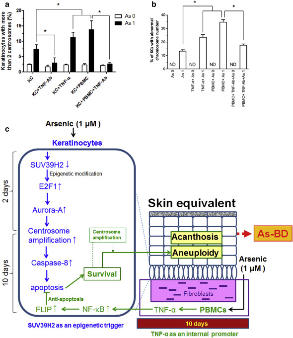 An Interaction between Arsenic-Induced Epigenetic Modification and ...