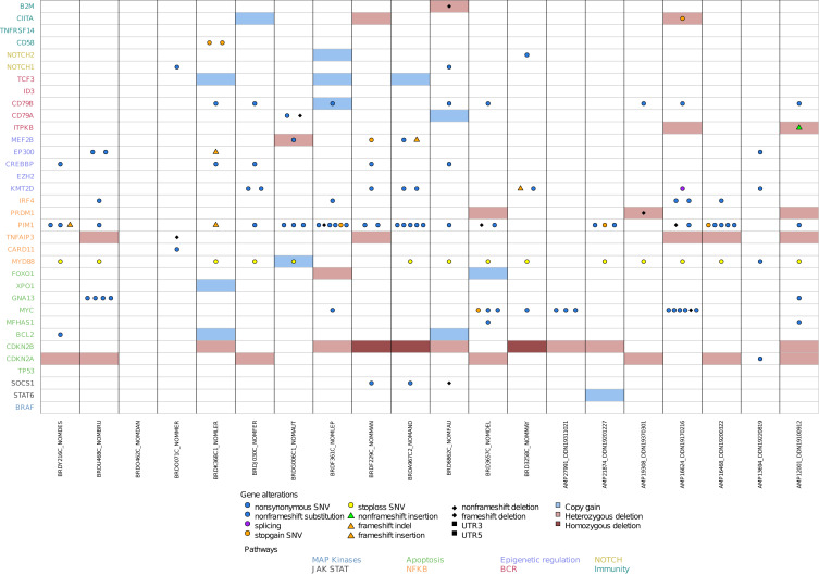Identification of Somatic Mutations in Primary Cutaneous