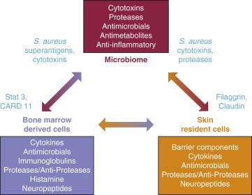 dysbiosis skin problems