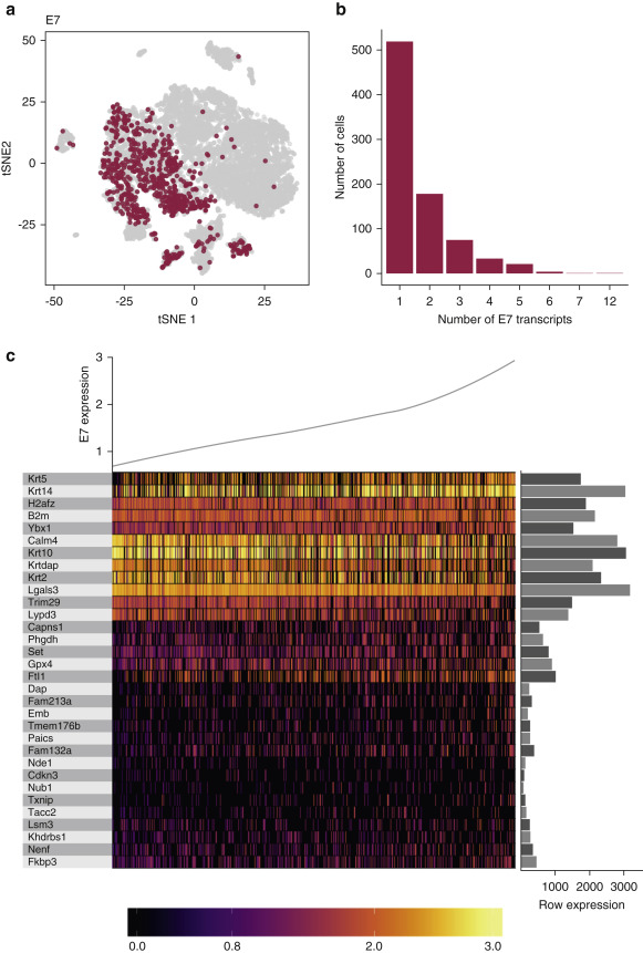 Detection of HPV E7 Transcription at Single-Cell Resolution