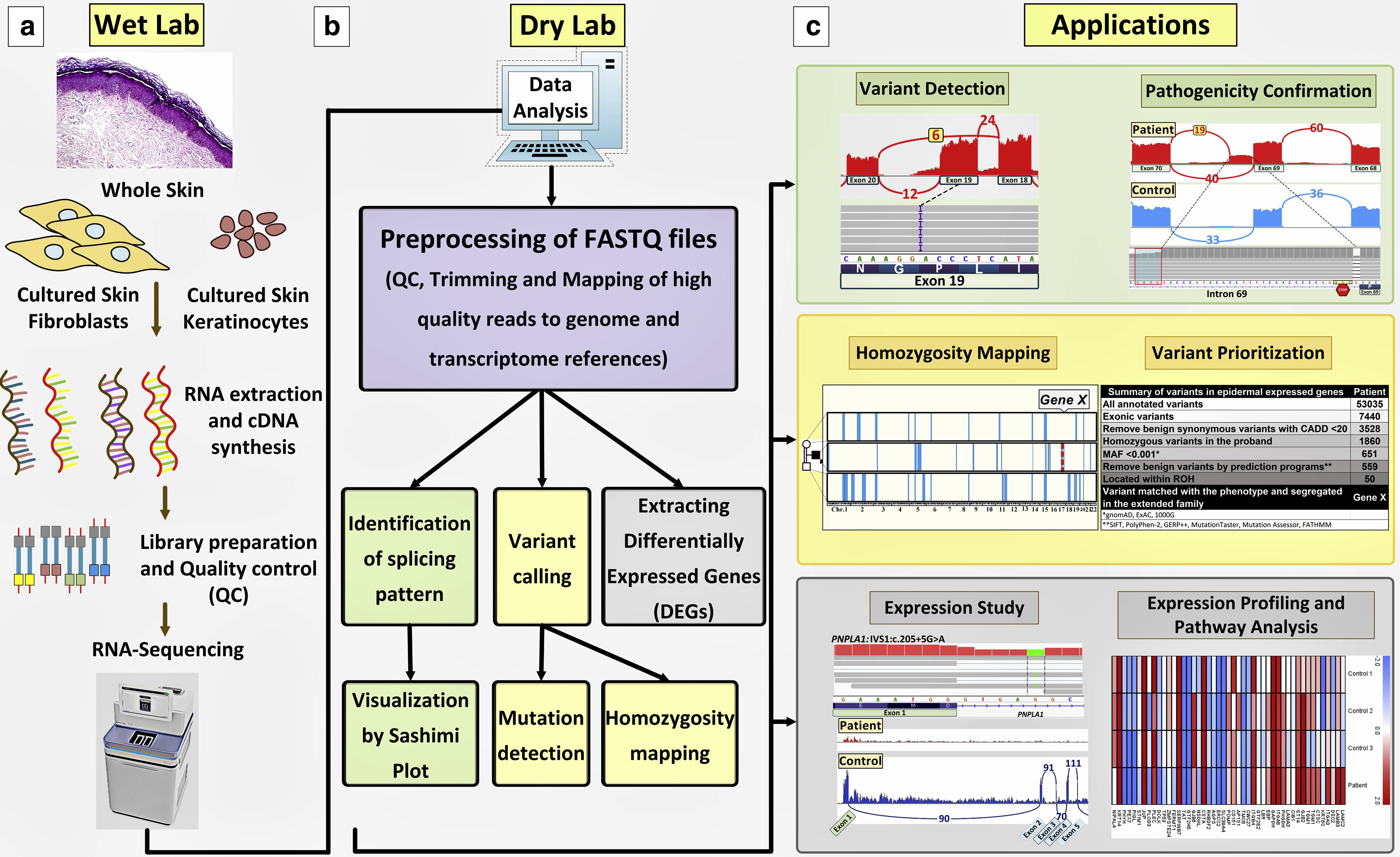 RNA-Seq technique workflow, the bioinformatics analysis steps, and potential…