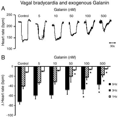 The cardiac sympathetic co-transmitter galanin reduces