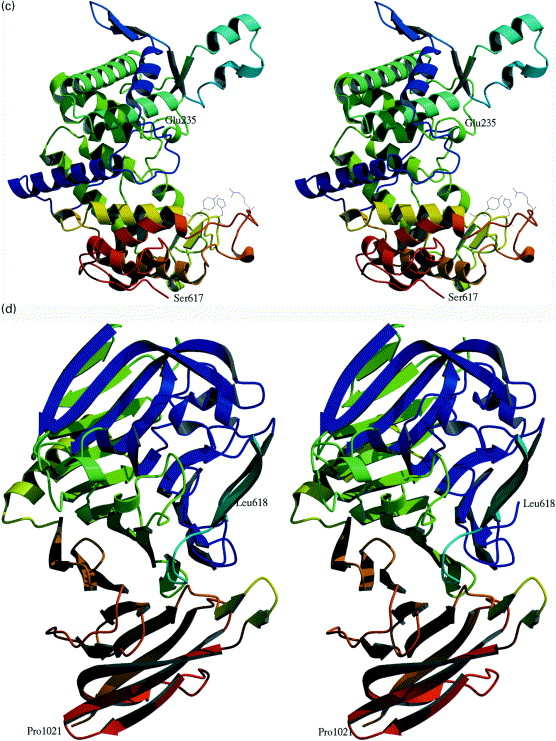 Crystal Structure of Proteus vulgaris Chondroitin Sulfate