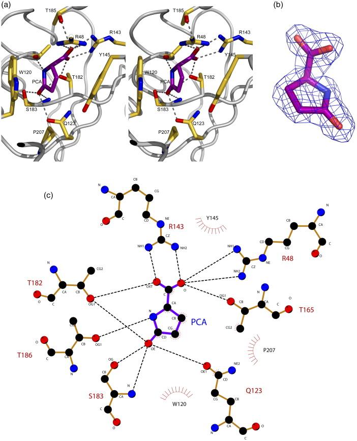 Crystal Structures Of Two Bordetella Pertussis Periplasmic Receptors