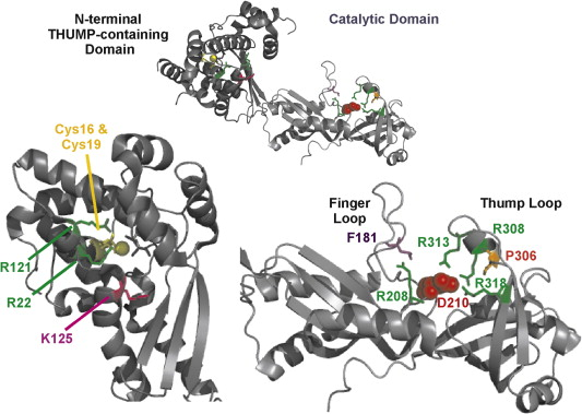tRNA Binding, Positioning, and Modification by the Pseudouridine