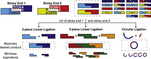 NP-Sticky: A Web Server for Optimizing DNA Ligation with Non