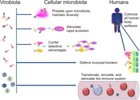 Molecular Bases and Role of Viruses in the Human Microbiome