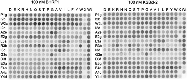 Locating Herpesvirus Bcl-2 Homologs in the Specificity Landscape of ...