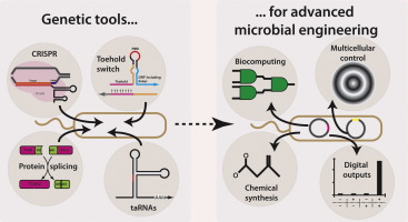 Tools and Principles for Microbial Gene Circuit Engineering ...