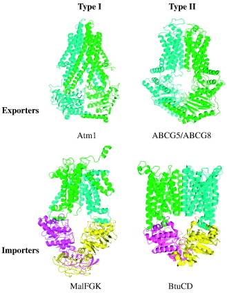 Mechanism of Action of ABC Importers: Conservation, Divergence, and