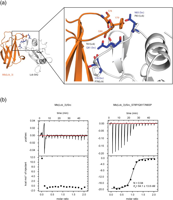 selective targeting of sh2 domain phosphotyrosine interactions of