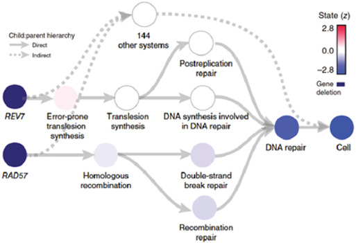 Synthetic Lethal Networks for Precision Oncology: Promises