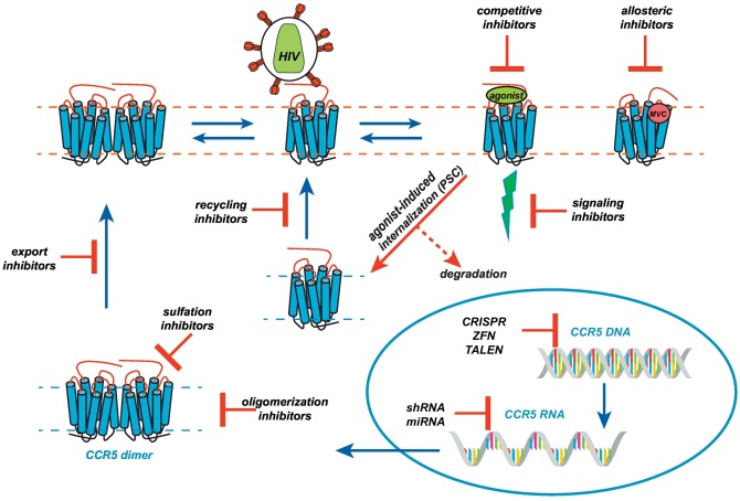 CCR5 Revisited: How Mechanisms...