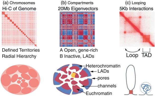 Communicating Genome Architecture Biovisualization Of The Genome