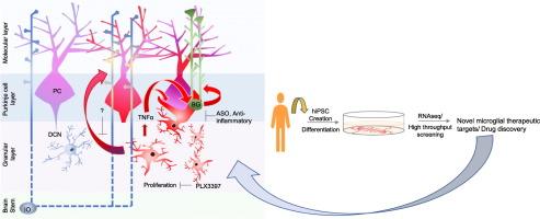Role of Microglia in Ataxias - ScienceDirect