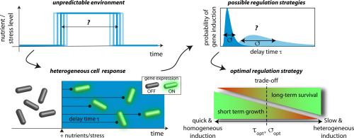 Heterogeneous Timing of Gene Induction as a Regulation