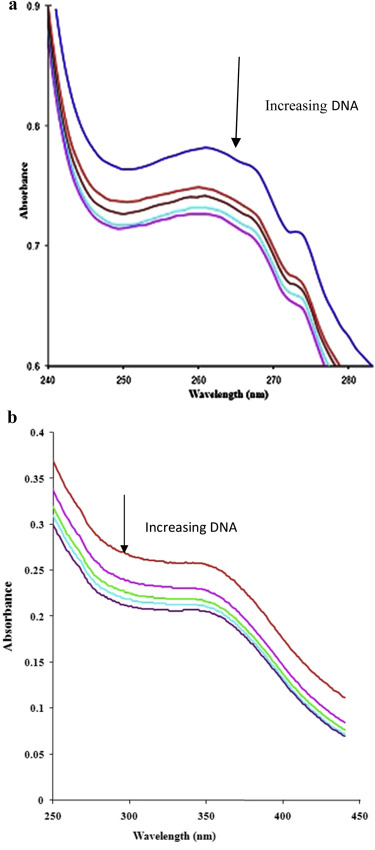 Exploration of cellular dna lesion dna binding and biocidal absorption spectrum of ligand l in buffer ph 72 at 25 c in presence of increasing amount of dna b absorption spectrum of culcl in buffer ph 72 at malvernweather Choice Image