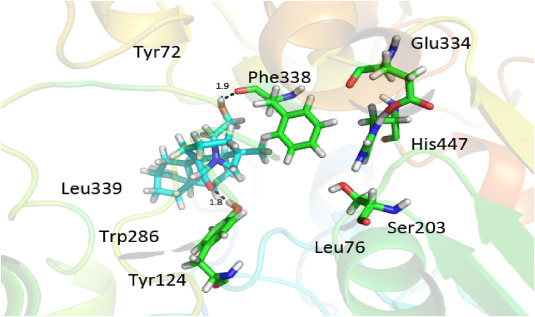 Crystal structure, phytochemical study and enzyme inhibition