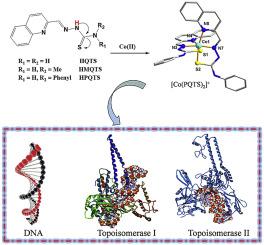 Co(III) complexes based on α-N-heterocyclic thiosemicarbazone
