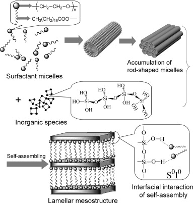 Self-assembly and confinement behaviors of poly(ethylene glycol