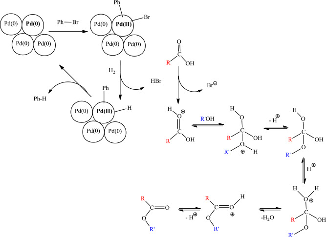 Esterification Transesterification And Hydrogenation Reactions Of