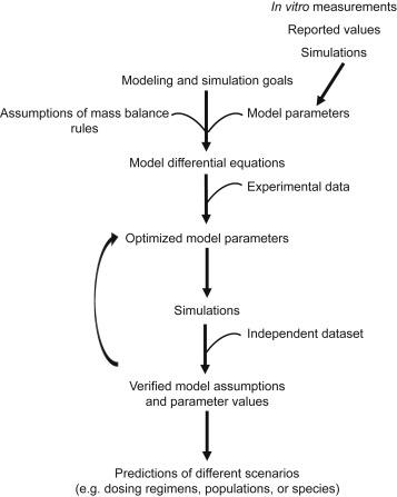 Physiologically Based Pharmacokinetic Modeling of