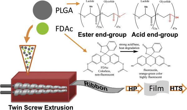 Tuning Drug Release via Twin Screw Extrusion in Polyester Films