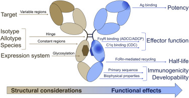 Considerations for the Design of Antibody-Based Therapeutics