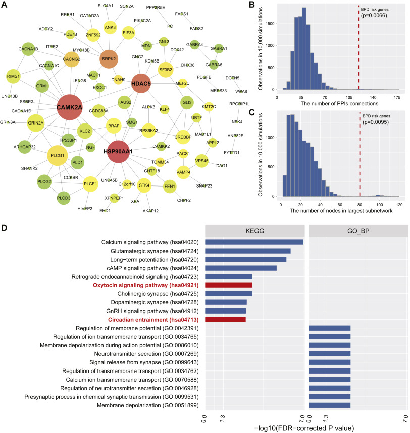 Interactome Analyses implicated CAMK2A in the genetic predisposition