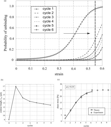Microstructural Model For Cyclic Hardening In F Actin Networks