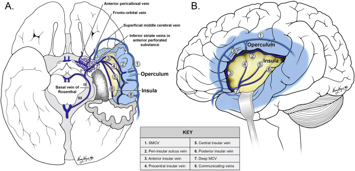 MRI venous architecture of insula - ScienceDirect