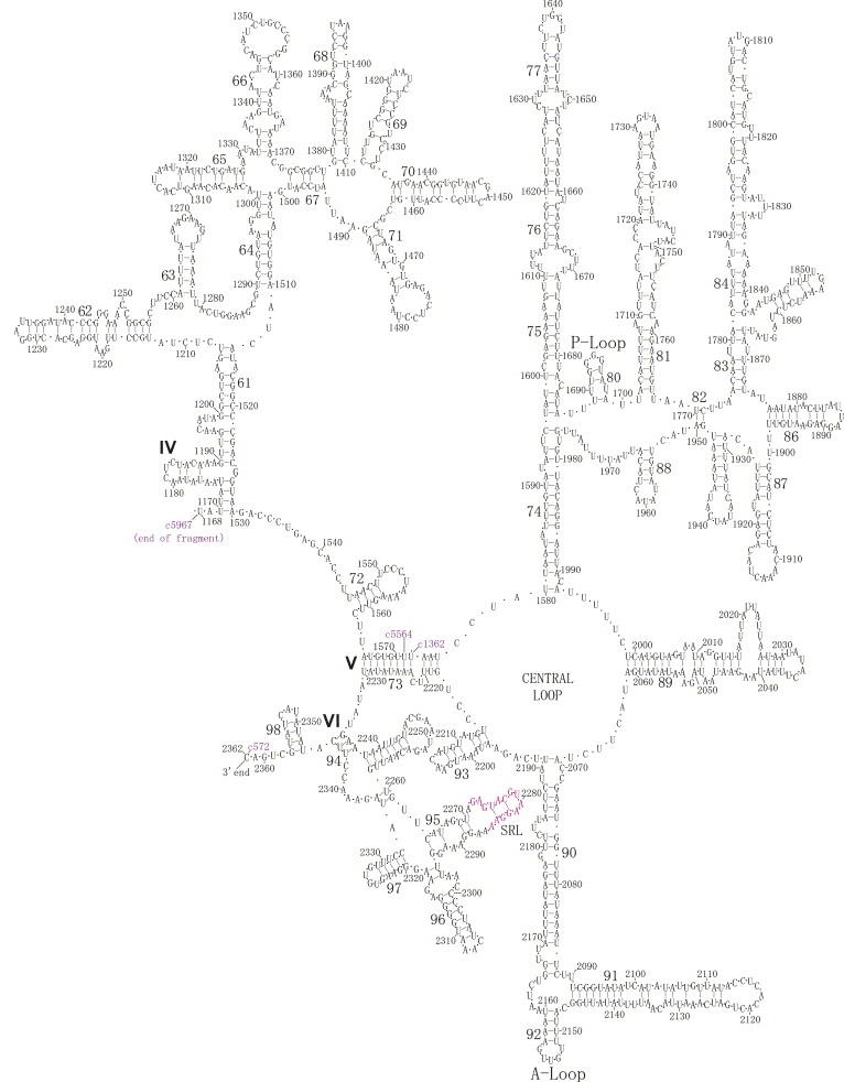 Mechanism Of Translation Based On Intersubunit Complementarities Of