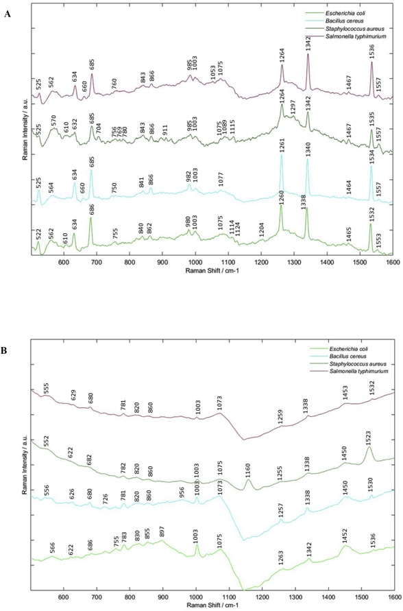 Raman spectroscopic analysis of food-borne microorganisms