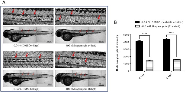 Expression of zTOR-associated microRNAs in zebrafish embryo