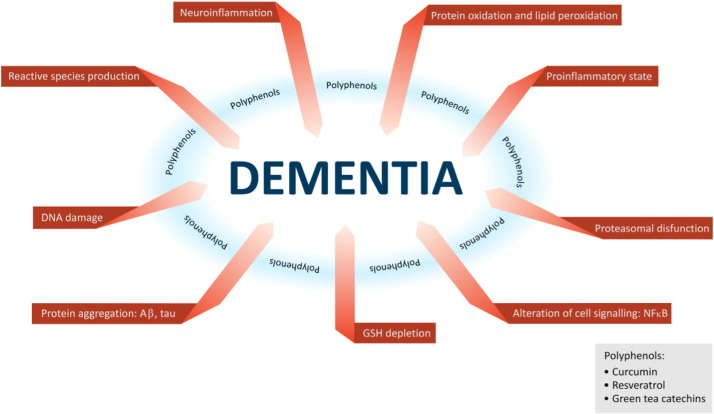 Polyphenols in dementia: From molecular basis to clinical