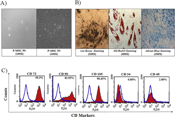 Hypoxia primed placental mesenchymal stem cells for wound