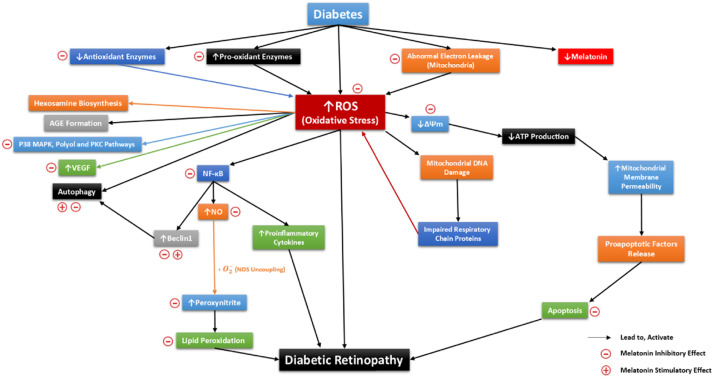 Stehle Maritim diabetic retinopathy pathogenesis and the ameliorating effects of