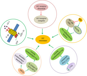 Molecular Mechanisms Of Glucocorticoid Resistance In Systemic