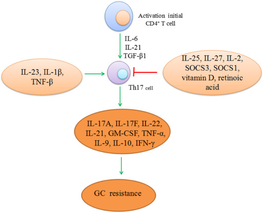 Molecular mechanisms of glucocorticoid resistance in systemic lupus