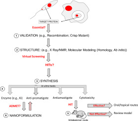 Leishmanicidal therapy targeted to parasite proteases - ScienceDirect