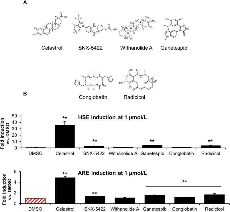 Celastrol-type HSP90 modulators allow for potent